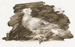 Pablo Picasso. Pigeon gray background
