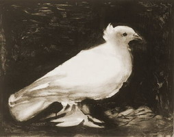 Pablo Picasso. The dove